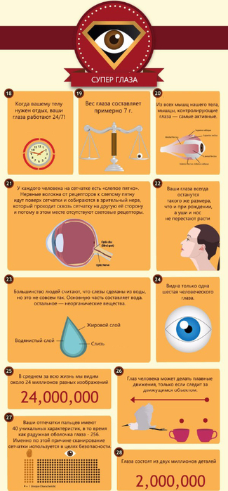 50 интересных фактов о глазах4 (325x700, 253Kb)