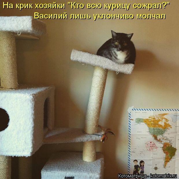 kotomatritsa_3F (620x620, 178Kb)