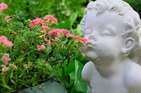 скульптура нюхает цветы !!!!!!!!!!!!!!!!!!!!!!!!!!! (600x398, 73Kb)