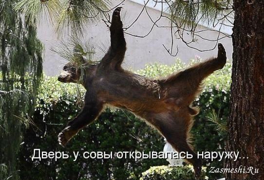 5680197_1747Vinnivprolyote (542x370, 78Kb)