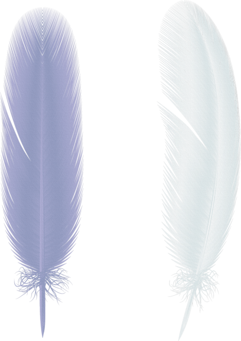 feathers (4) (496x700, 399Kb)