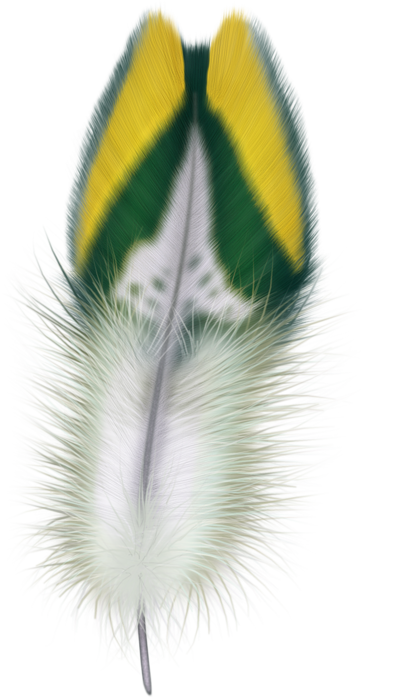 feathers (35) (397x700, 442Kb)