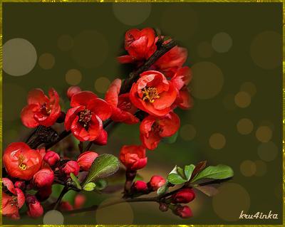 Красная-ветка (400x319, 174Kb)