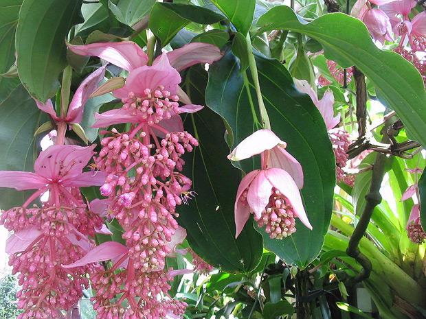 flower_02 (620x465, 413Kb)