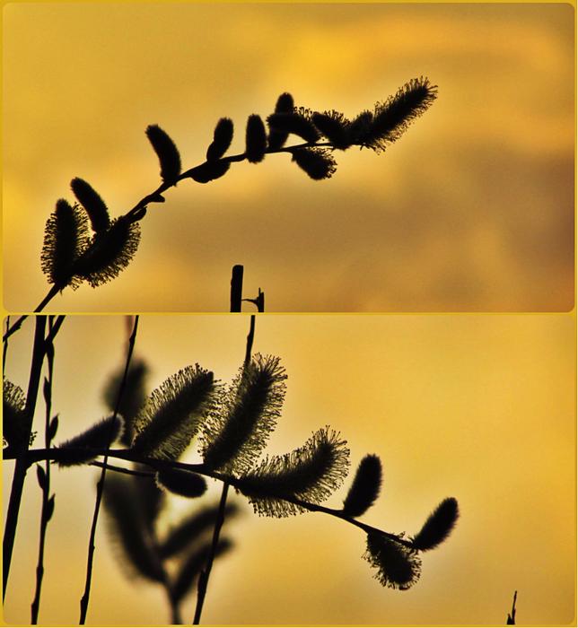 collage верба (644x700, 487Kb)