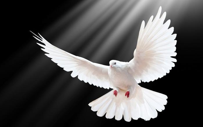 dove_scale_wings_light-Bird_Photography_HD_wallpaper_2560x1600 (700x437, 38Kb)