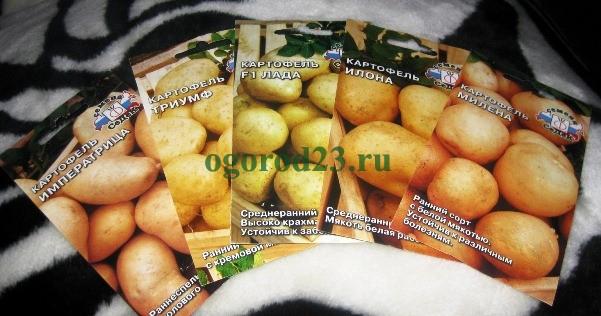 KartofelSemena8 (601x316, 227Kb)