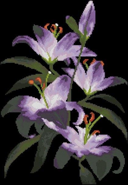 ночные лилии1jpg (420x604, 183Kb)