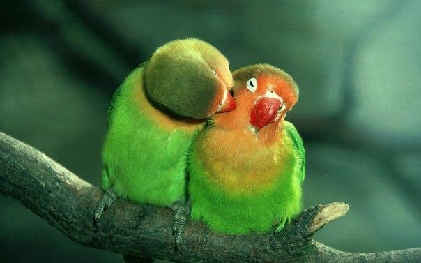 не могла пройти мимо 1 нежный поцелуй (604x377, 150Kb)