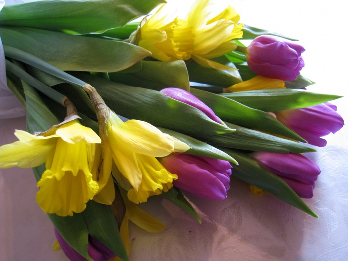 Продавали южные тюльпаны цветы н метелкина
