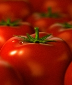 Трансгенные растения росли обычными для томата (сорта Pusa ruby) темпами, давали стандартное количество плодов...