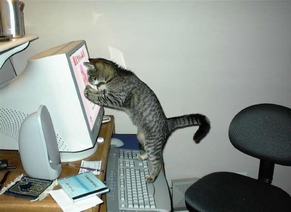 05451-65180121-cats_firefun (600x437, 33Kb)