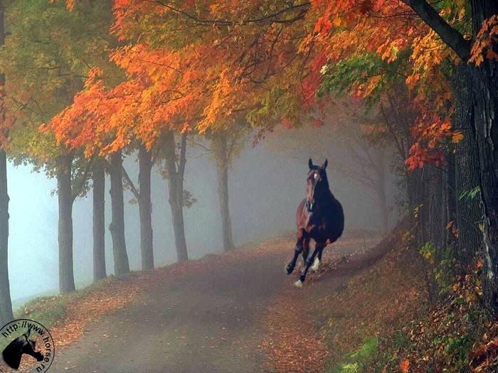 """Схема вышивки  """"Лошадь в лесу """" ."""