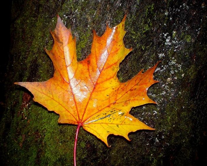 Картины на тему осень