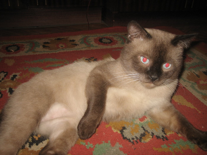 проститутки для кота