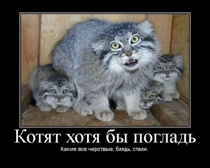 http://img1.liveinternet.ru/images/attach/c/0/34/445/34445106_1225285424_122520025760_5.jpg