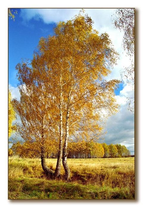 http://img1.liveinternet.ru/images/attach/c/0/34/525/34525087_1004495.jpg