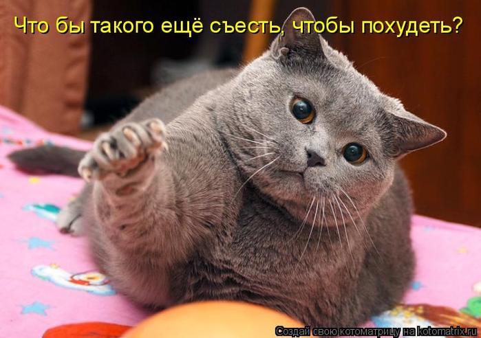 Кошки собаки смешные картинки кошки