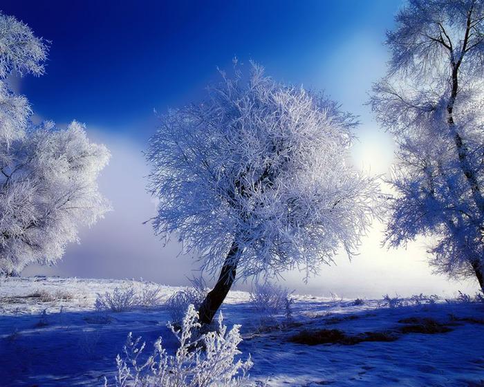 8371726_winter11280 (700x560, 175Kb)