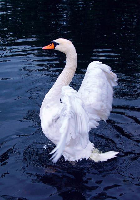 Схема лебедь вышивка