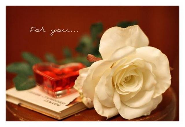 Что обозначают белые розы в подарок девушке 82
