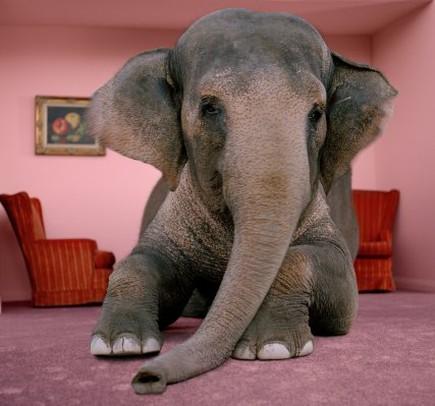 15 причин купить слона