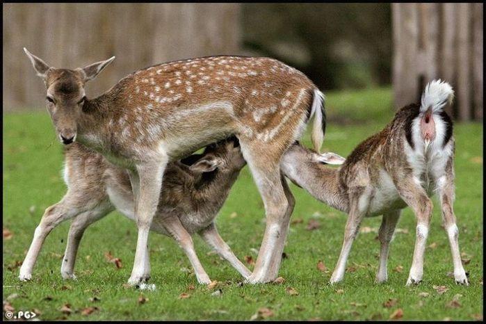 4 раз. Нравится Поделиться. Фото приколы. мир загадок животные