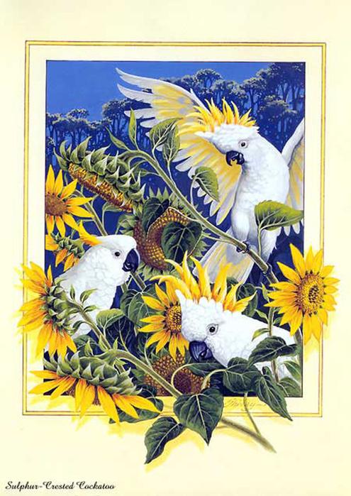Gallery.ru / Фото #7 - вышивка Супер птицы ( схемы есть) - Olgytka.