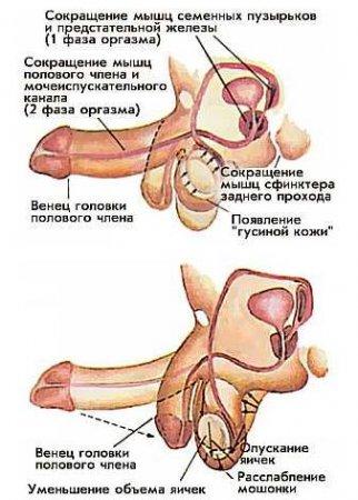 Анатомичка | Записи в рубрике
