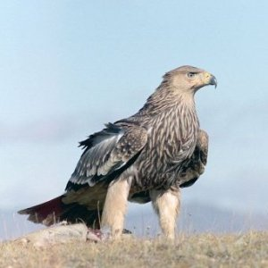 птичко (300x300, 15Kb)