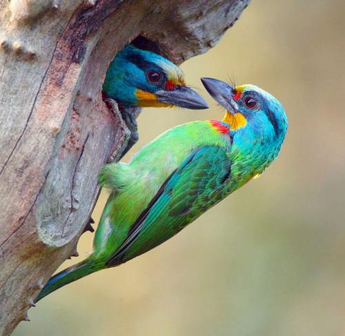 Про птичек.../ John Soong.