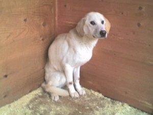 Собака в состоянии крайнего истощения и стресса... Один из Московских приютов.