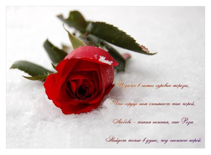 Дорогой Друг, если у Вас есть свои интересные стихи, пришлите их Админу и они будут выложены здесь.