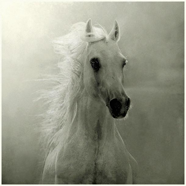 Ну просто нельзя не любоваться этими прекрасными, благородными и грациозными животными.  Фотограф Wojtek Kwiatkowski.