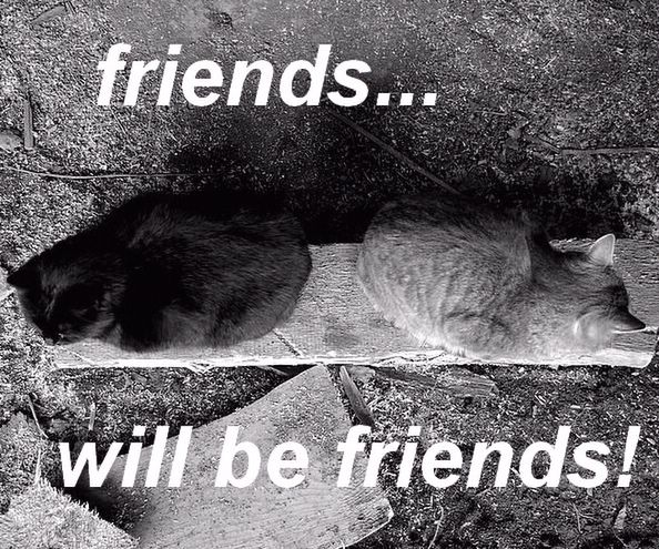 friends друзья
