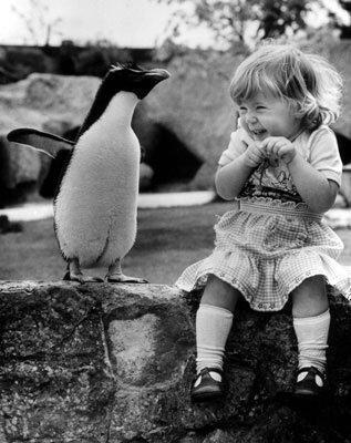 penguin пингвин