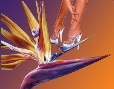 Красивые женщины фото ножки - Фотогалерея красивых девушек.