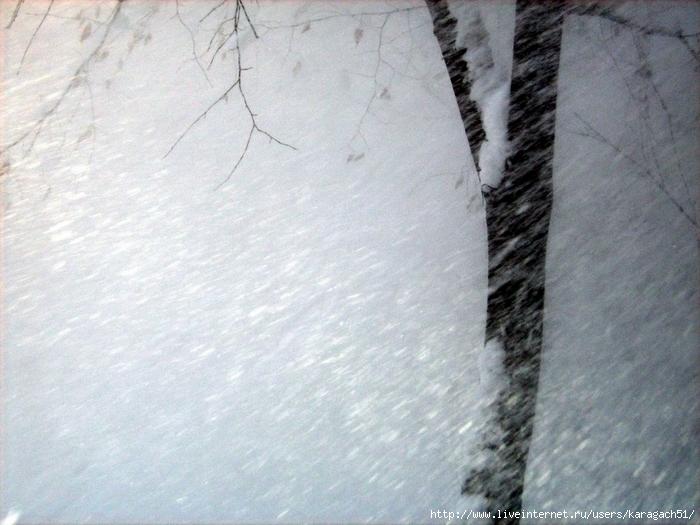 http://img1.liveinternet.ru/images/attach/c/0/38/468/38468094_Metel.JPG