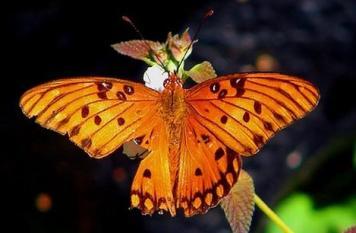 butterflies_07 (356x233, 14Kb)