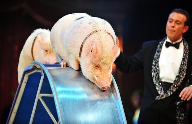 Карл Фердинанд выступает с кабаном-альбиносом, Монако
