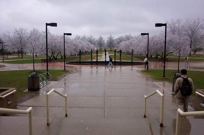 Frozencherrytrees (700x466, 37Kb)