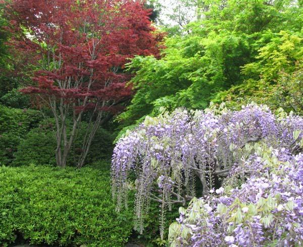 Лесные растения с белыми цветами 64