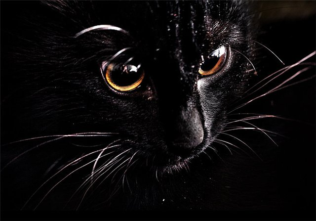 А по ночам она превращалась в кошку...