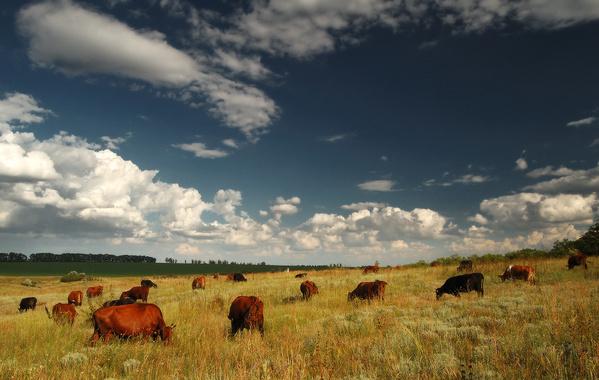 Чудові пейзажі земель західної