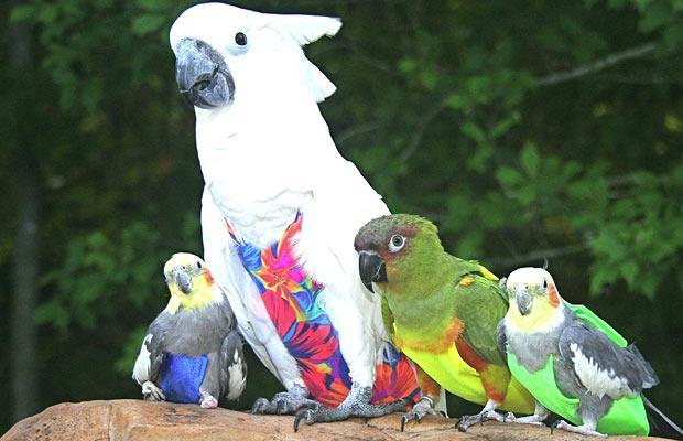 День в картинках яркие попугаи