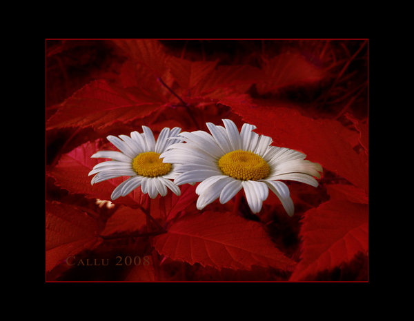 Autumn_Nice_by_Callu (600x466, 45Kb)