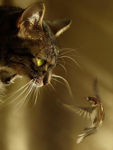 Рис. 9377, добавлено 1.2.2012.  Похожие темы: кошки прикольное смешное видео и картинки с котами смешными.