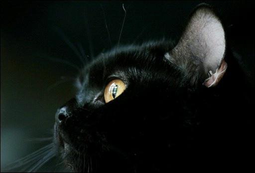 О черной кошке замолвлю слово