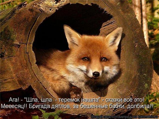 http://img1.liveinternet.ru/images/attach/c/0/39/788/39788559_23f0d4b2d034.jpg