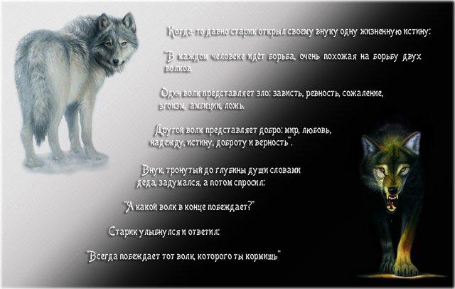 Стихи и песни про волков в картинках 40143198_dea68484c41e_dva_volka
